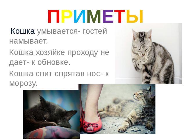 ПРИМЕТЫ Кошка умывается- гостей намывает. Кошка хозяйке проходу не дает- к о...