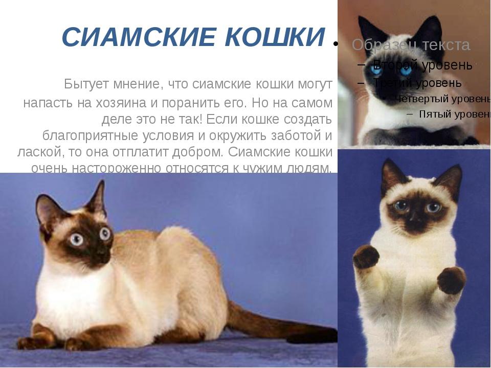 СИАМСКИЕ КОШКИ Бытует мнение, что сиамские кошки могут напасть на хозяина и...
