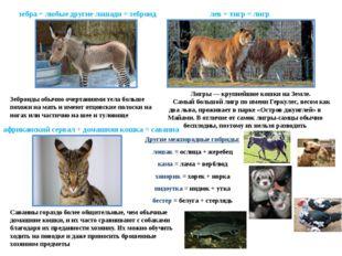 зебра + любые другие лошади = зеброид Зеброиды обычно очертаниями тела больше