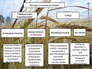 Методы селекции растений Гибридизация (скрещивание) Отбор близкородственная н