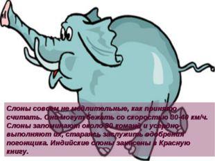 Слоны совсем не медлительные, как принято считать. Они могут бежать со скорос