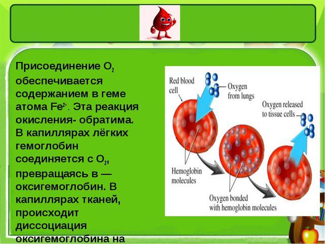 Присоединение O2 обеспечивается содержанием в геме атома Fe2+. Эта реакция...