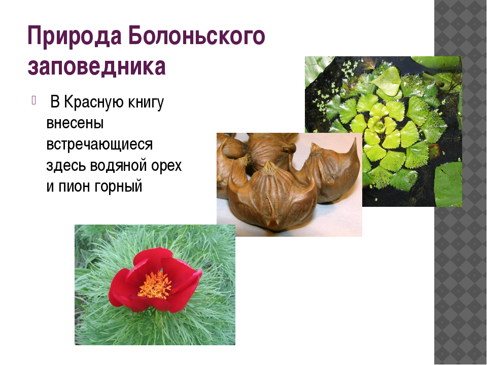 Природа Болоньского заповедника В Красную книгу внесены встречающиеся здесь в...