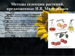 Методы селекции растений, предложенные И.В. Мичуриным С помощью метода ментор