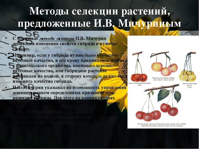 Методы селекции растений, предложенные И.В. Мичуриным С помощью метода ментор...