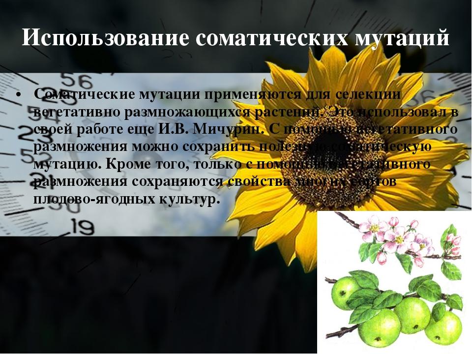 Использование соматических мутаций Соматические мутации применяются для селек...
