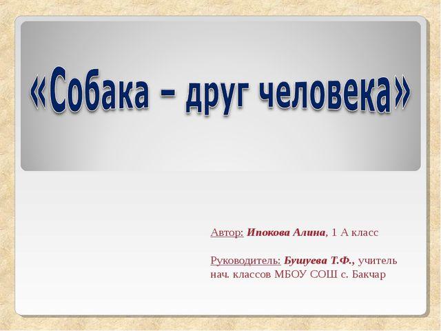 Автор: Ипокова Алина, 1 А класс Руководитель: Бушуева Т.Ф., учитель нач. клас...