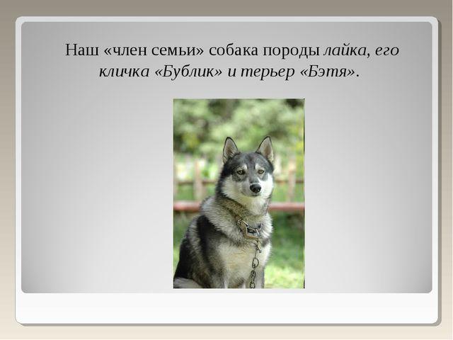 Наш «член семьи» собака породы лайка, его кличка «Бублик» и терьер «Бэтя».