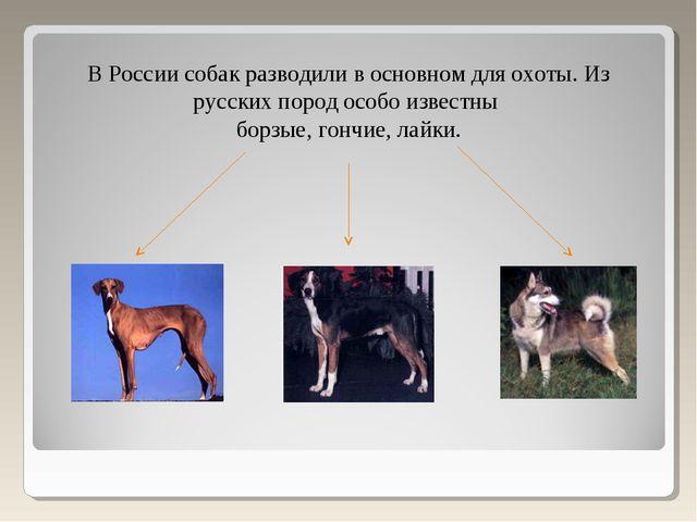 В России собак разводили в основном для охоты. Из русских пород особо известн...