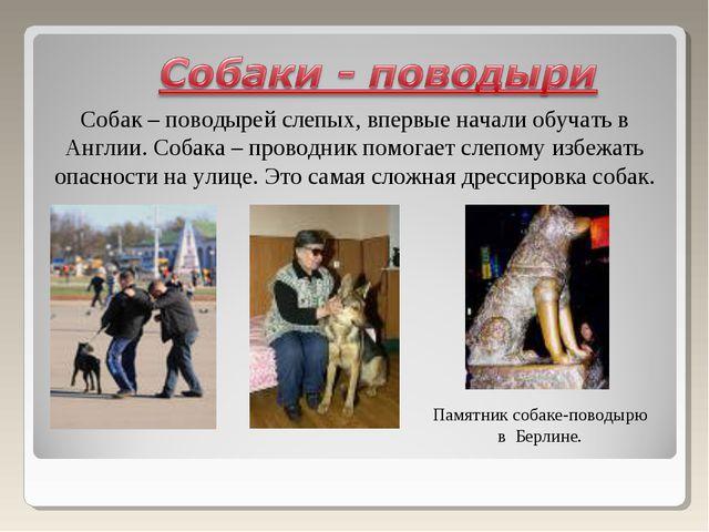 Собак – поводырей слепых, впервые начали обучать в Англии. Собака – проводник...