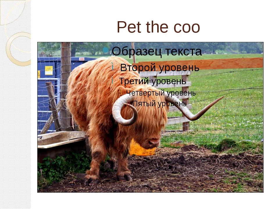Pet the coo