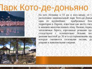 Парк Кото-де-доньяно На юге Испании в 55 км к юго-западу от Севильи, располож