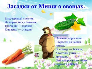 Загадки от Миши о овощах. За кучерявый хохолок Из норки лиску поволок. Трогае