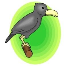 BIRD579