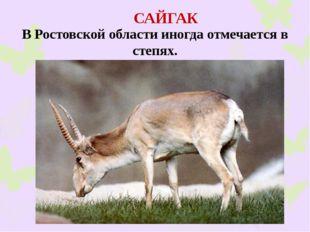 САЙГАК В Ростовской области иногда отмечается в степях.