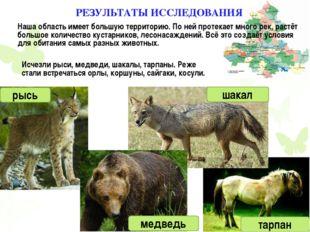 Исчезли рыси, медведи, шакалы, тарпаны. Реже стали встречаться орлы, коршуны