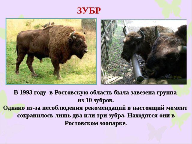 ЗУБР В 1993 году в Ростовскую область была завезена группа из 10 зубров. Одна...