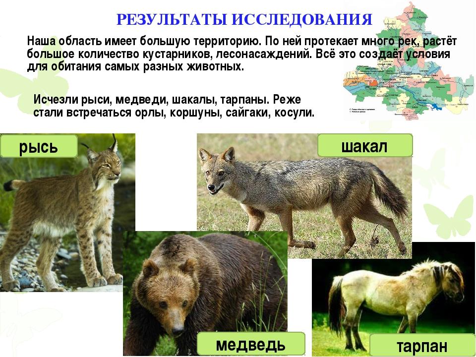Исчезли рыси, медведи, шакалы, тарпаны. Реже стали встречаться орлы, коршуны...