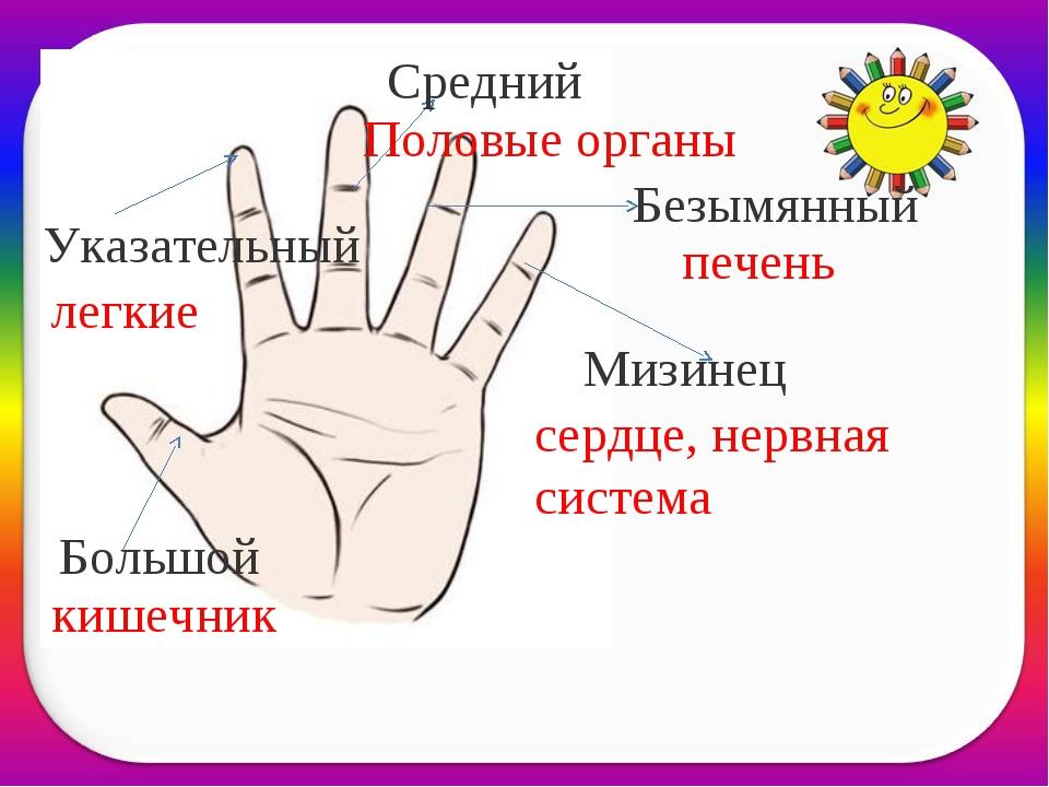 Большой Безымянный Средний Указательный Мизинец печень Половые органы сердце,...