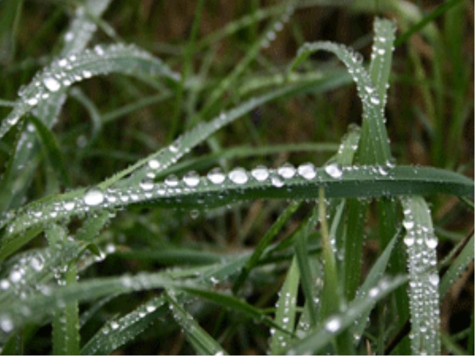 анимация роса на траве красивыми