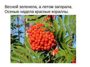 Весной зеленела, а летом загорала, Осенью надела красные кораллы.