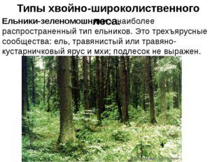 Типы хвойно-широколиственного леса. Ельники-зеленомошники – наиболее распрос