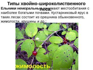 Ельники неморальные занимают местообитания с наиболее богатыми почвами. Куста