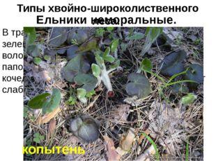 В травяном покрове преобладают сныть, зеленчук, лютик кашубский, копытень, ос