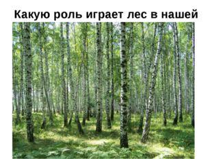 Какую роль играет лес в нашей жизни?