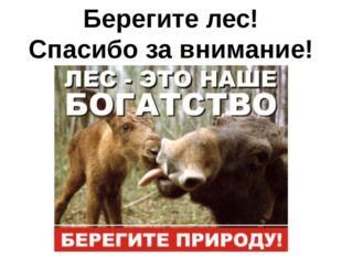 Берегите лес! Спасибо за внимание!