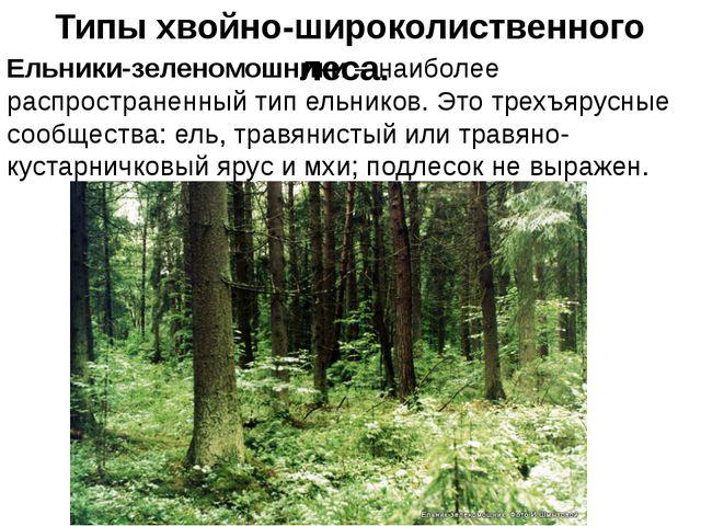 Типы хвойно-широколиственного леса. Ельники-зеленомошники – наиболее распрос...