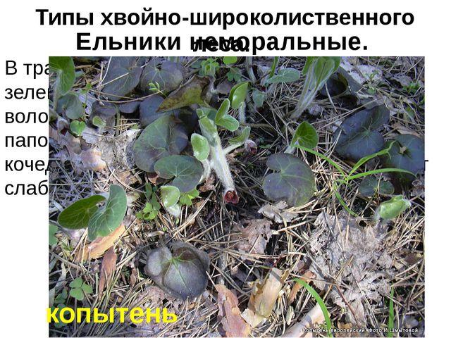 В травяном покрове преобладают сныть, зеленчук, лютик кашубский, копытень, ос...