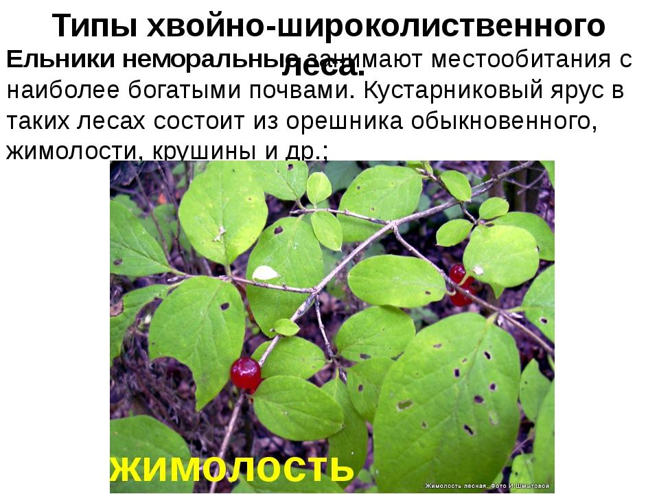 Ельники неморальные занимают местообитания с наиболее богатыми почвами. Куста...