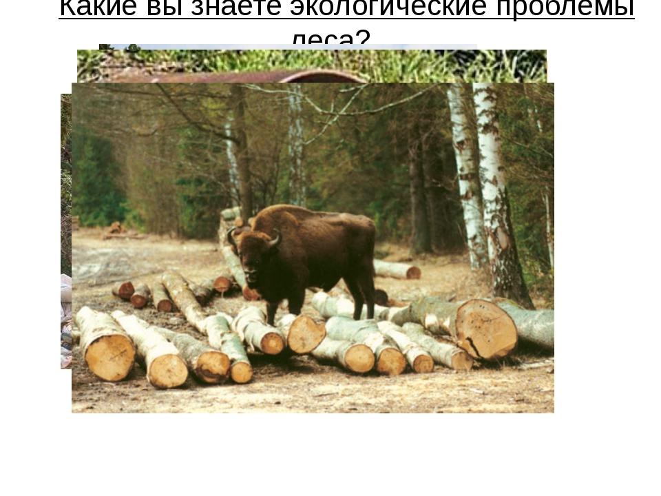 Какие вы знаете экологические проблемы леса?