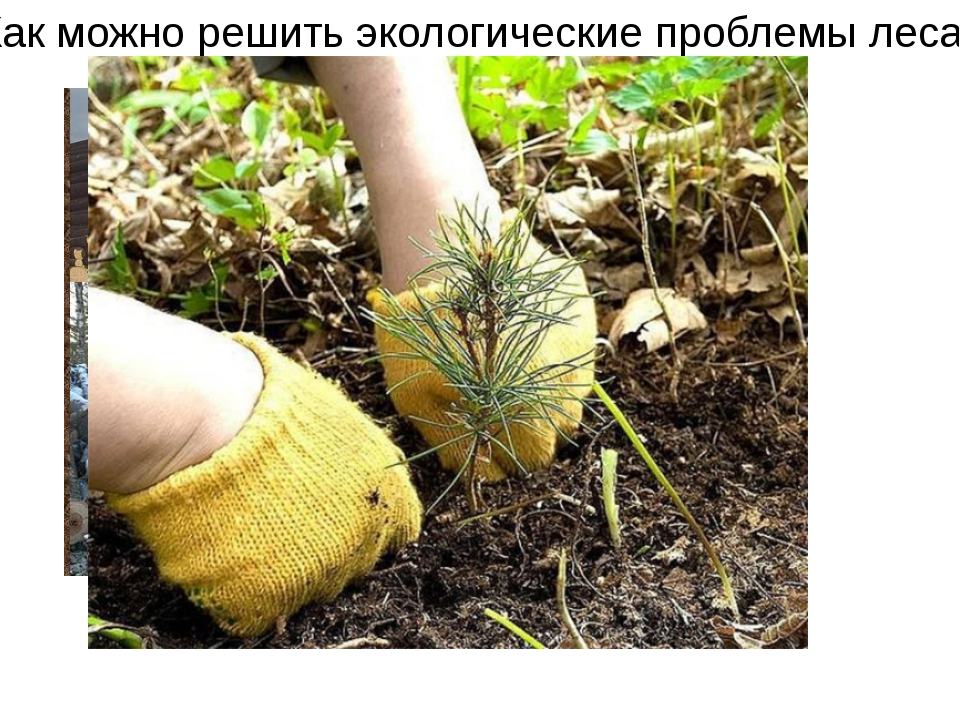 Как можно решить экологические проблемы леса?