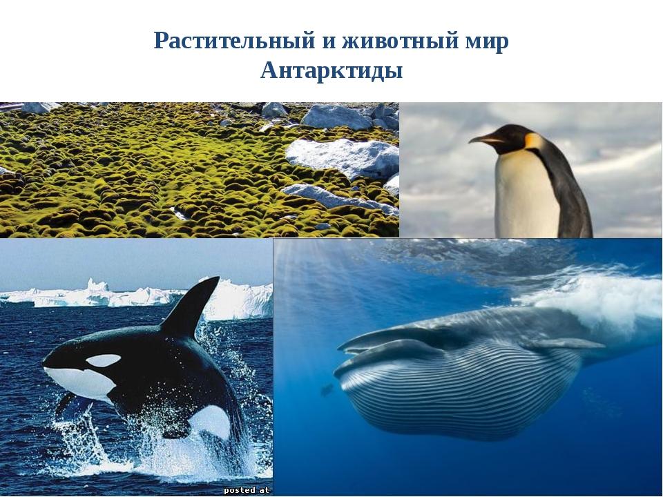 Тесты по теме «ГП. Открытие и изучение Антарктиды» По площади материк занима...