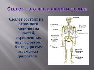 Скелет состоит из огромного количества костей, скрепленных друг с другом. Бла