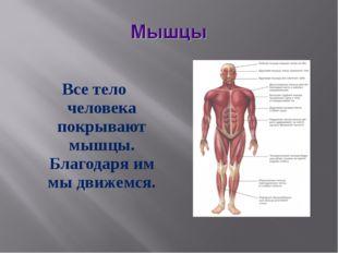 Все тело человека покрывают мышцы. Благодаря им мы движемся.