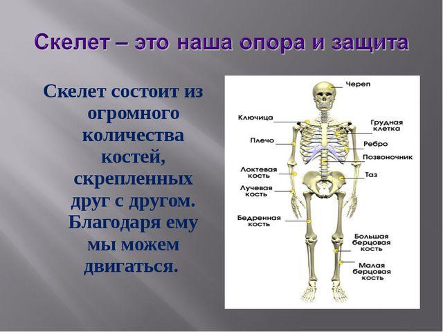 Скелет состоит из огромного количества костей, скрепленных друг с другом. Бла...