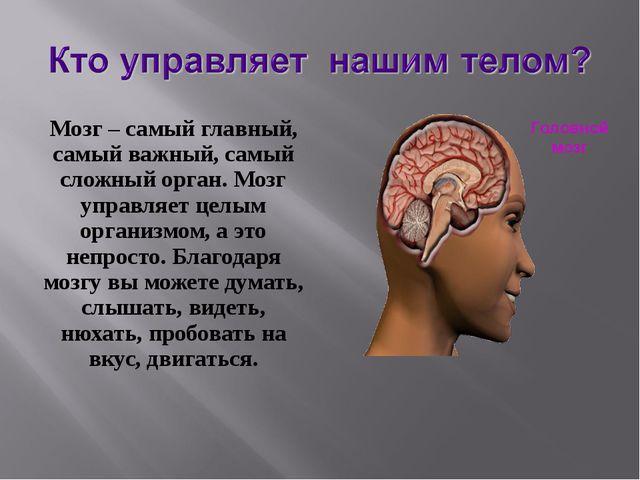 Мозг – самый главный, самый важный, самый сложный орган. Мозг управляет целым...