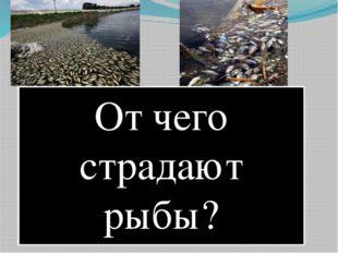 От чего страдают рыбы?
