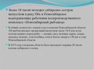 Более 18 тысяч молодых сибирских осетров выпустили в реку Обь и Новосибирско