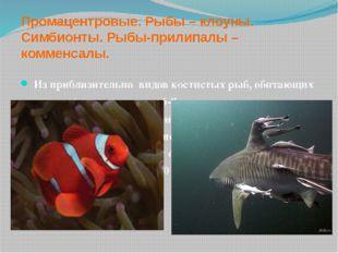 Промацентровые. Рыбы – клоуны. Симбионты. Рыбы-прилипалы – комменсалы. Из при