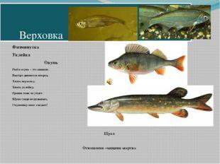 Верховка Физминутка Уклейка Окунь Рыба окунь – это хищник. Быстро движется в
