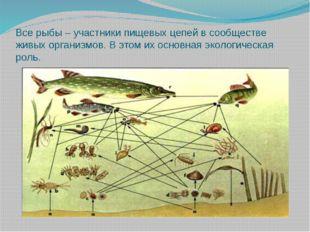 Все рыбы – участники пищевых цепей в сообществе живых организмов. В этом их о