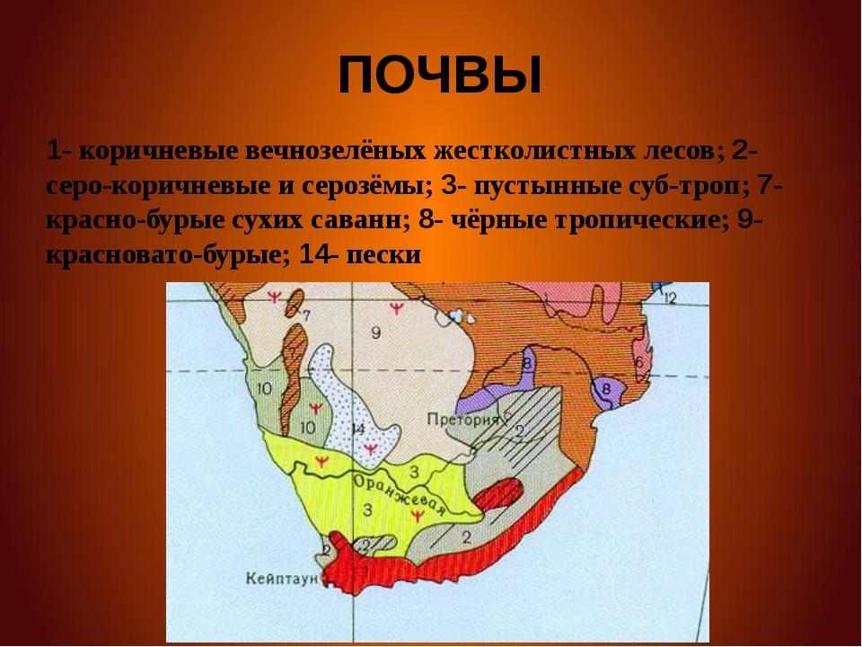 ПОЧВЫ 1- коричневые вечнозелёных жестколистных лесов; 2- серо-коричневые и с...