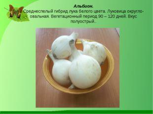 Альбион. Среднеспелый гибрид лука белого цвета. Луковица округло-овальная. В
