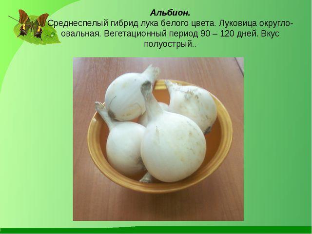 Альбион. Среднеспелый гибрид лука белого цвета. Луковица округло-овальная. В...