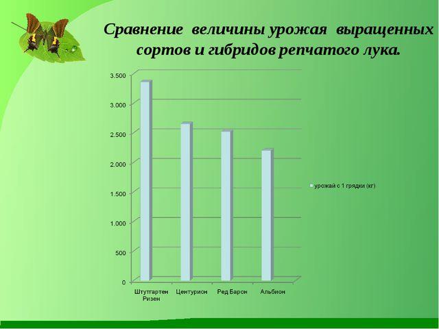 Сравнение величины урожая выращенных сортов и гибридов репчатого лука.