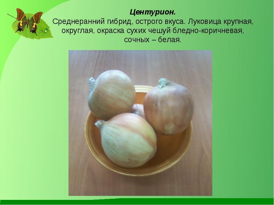 Центурион. Среднеранний гибрид, острого вкуса. Луковица крупная, округлая, о...